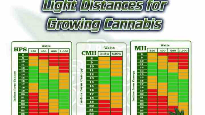 light distance chart for growing cannabis, LED, CMH, LEC, HPSS, MH, , beginners guide to growing weed, how to grow weed for personal use, cannabis plant deficiency, how to germinate cannabis seeds, where to buy cannabis seeds, best weed growers website, Cannabis Growers forum, weed growers forum, How to grow legal cannabis, a step by step guide to growing weed, cannabis growing guide, tips for marijuana growers, growing cannabis plants for the first time, marijuana growers forum, marijuana growing tips, cannabis plant problems, cannabis plant help, marijuana growing expert advice