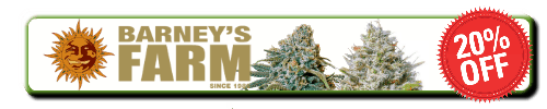 How to grow cannabis, how to grow weed, a step by step guide to growing weed, cannabis growers forum, need help with sick plant, what's wrong with my cannabis plant, percys Grow Room, the Grow Room, percys Grow Guides, we'd growing forum, weed growers community, how to grow weed in coco, when is my cannabis plant ready for harvest, how to feed my cannabis plant, beginners guide to growing weed, how to grow weed for personal use, cannabis plant deficiency, how to germinate cannabis seeds, where to buy cannabis seeds, best weed growers website, Cannabis Growers forum, weed growers forum, How to grow legal cannabis, a step by step guide to growing weed, cannabis growing guide, tips for marijuana growers, growing cannabis plants for the first time, marijuana growers forum, marijuana growing tips, cannabis plant problems, cannabis plant help, marijuana growing expert advice