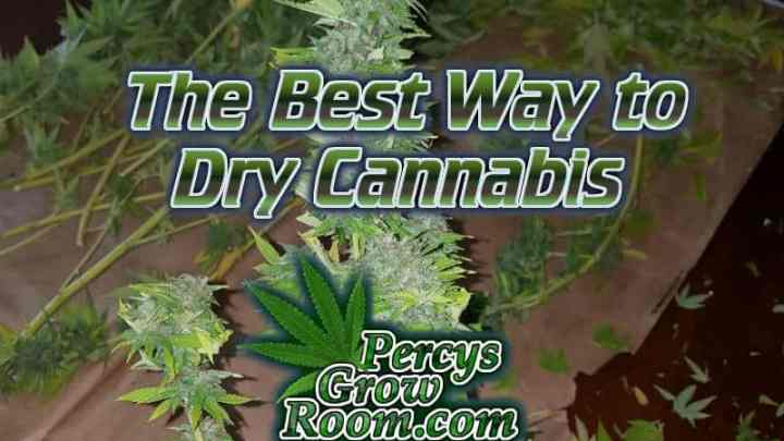 how to dry weed, after harvest, drying cannabis, indoors cannabis growing, led lights, beginners guide to growing weed, how to grow weed for personal use, cannabis plant deficiency, how to germinate cannabis seeds, where to buy cannabis seeds, best weed growers website, Cannabis Growers forum, weed growers forum, How to grow legal cannabis, a step by step guide to growing weed, cannabis growing guide, tips for marijuana growers, growing cannabis plants for the first time, marijuana growers forum, marijuana growing tips, cannabis plant problems, cannabis plant help, marijuana growing expert advice