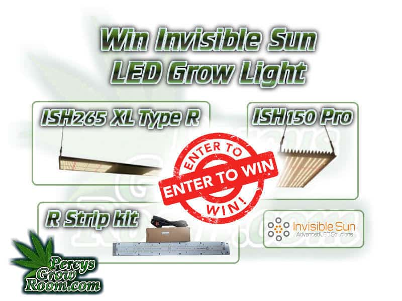 invisible sun led grow lights, ish600, beginners guide to growing weed, how to grow weed for personal use, cannabis plant deficiency, how to germinate cannabis seeds, where to buy cannabis seeds, best weed growers website, Cannabis Growers forum, weed growers forum, How to grow legal cannabis, a step by step guide to growing weed, cannabis growing guide, tips for marijuana growers, growing cannabis plants for the first time, marijuana growers forum, marijuana growing tips, cannabis plant problems, cannabis plant help, marijuana growing expert advice