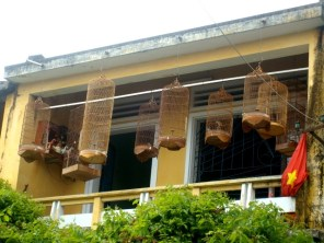 The Vietnamese people seem to love collecting songbirds. Photo Nadia Krige