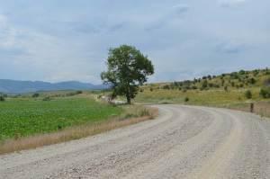 Samotne drzewo przy drodze