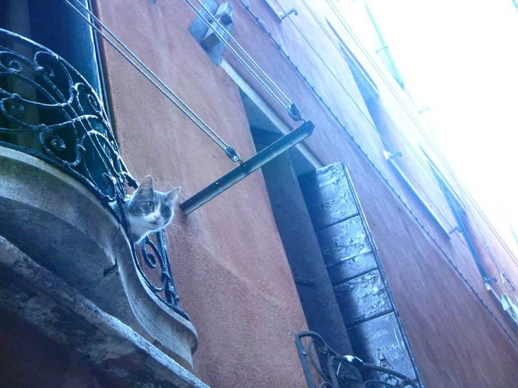Kot na uliczce w Wenecji