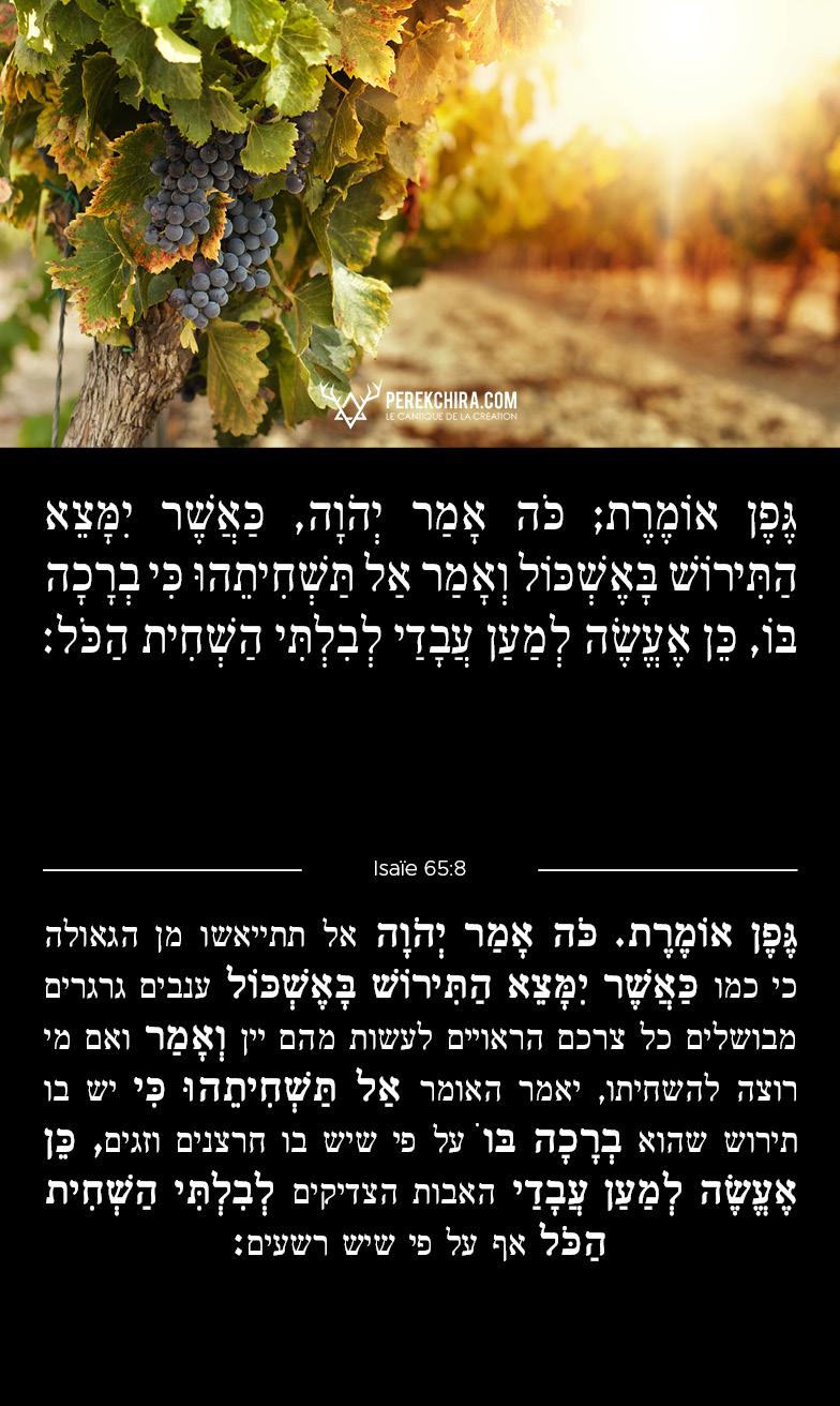 Perek chira commenté en hébreu