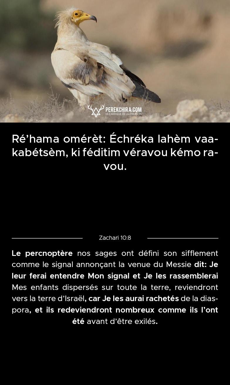 Perek chira commenté en phonétique
