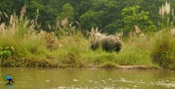 A rhino we saw during a boat trip.