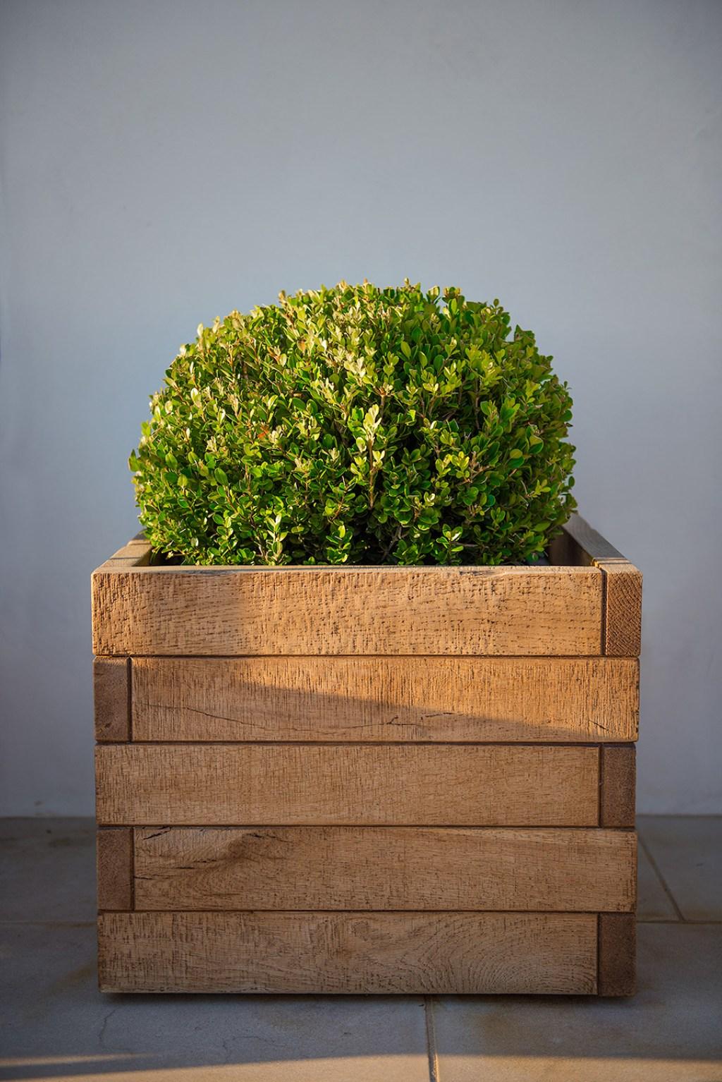 c2 planter