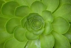 Garden Design Irvine