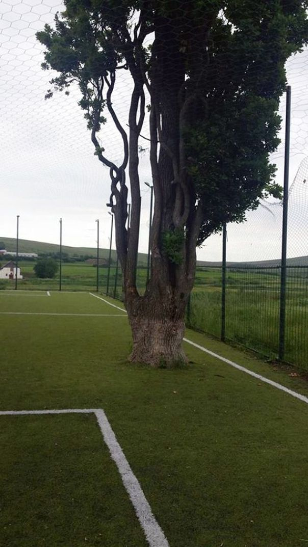 PAY-Tree-on-football-pitch-2