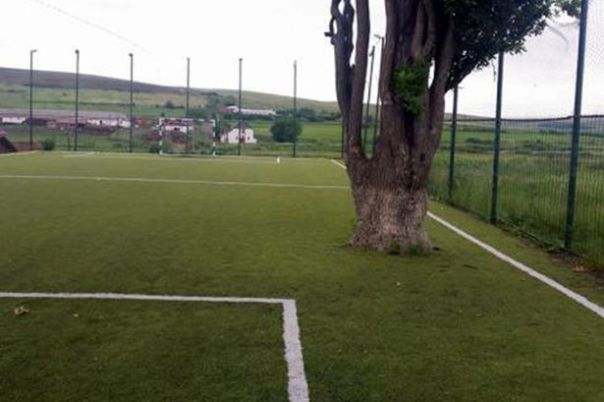 PAY-Tree-on-football-pitch