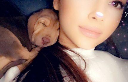 Ariana Grande's new dogs!