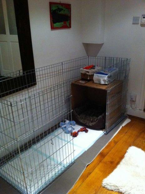 puppy potty setup