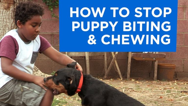 How to Stop Puppy Biting and Chewing.jpg