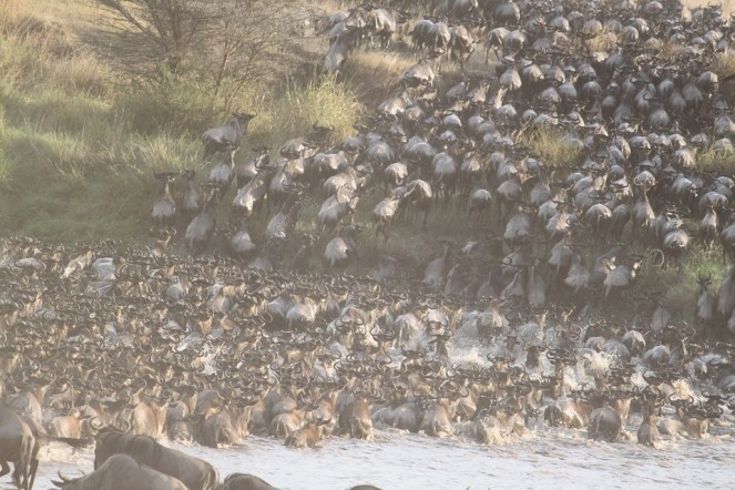 great-migration-1021460_960_720