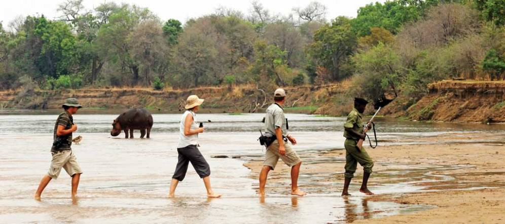 HR_Francois-d_Elbee_Remote-Africa_hippos-mwal-6