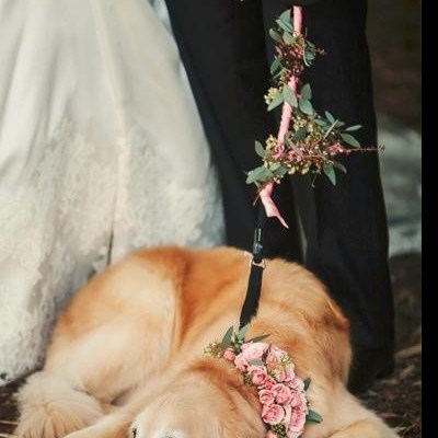 Wedding Inspiration: Incorporating Your Dog Into Your Wedding Day!