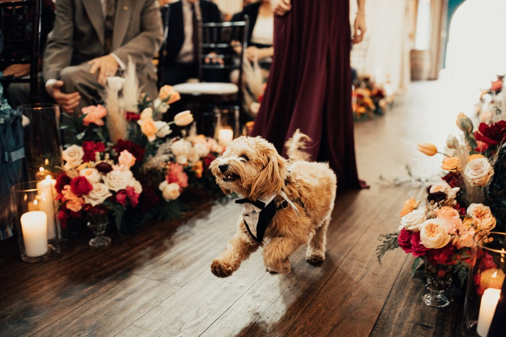 Ernie, Lisa + Tom's fur baby, changed his mind and made his way down the aisle this time with gusto and enthusiasm showing off his dapper tuxedo. Click for more wedding inspiration from this modern boho wedding at Sodo Park in Seattle. Event planning by Perfectly Posh Events, based in Seattle and Portland. Wedding photography by Berty Mandagie. Florals by Herban Design Studio. #perfectlyposhevents