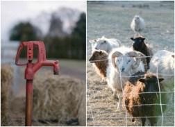 farm-wedding-ideas
