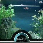 Aquard.io – alimenta y cuida a peces reales desde tu ordenador