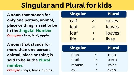 Singular and plural for kids