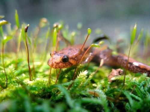 eo03 biehl parfumkunstwerke Salamander Dave Huth Flickr
