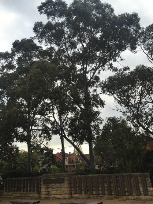 Sampaquita Ormonde Jayne Parramatta Cemetery 2015 #2