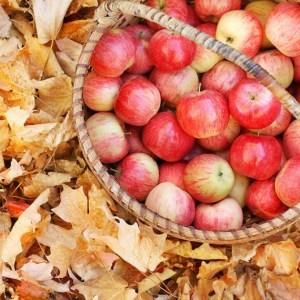 apppleorchard