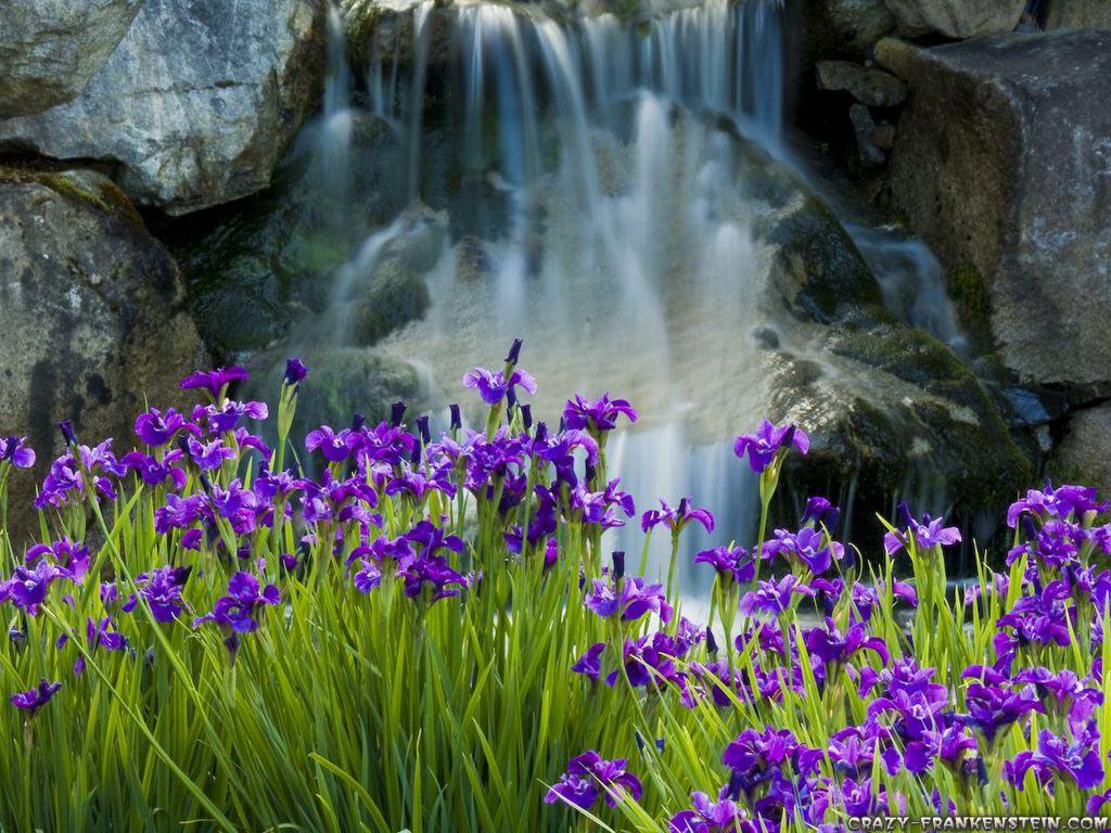 Iris Perfumes - Atelier des Ors Iris Fauve, Coolife Le Sixième and Armani/Prive Iris Celadon