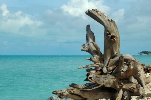 driftwood-on-the-beach- Vanille Marine M. Micallef