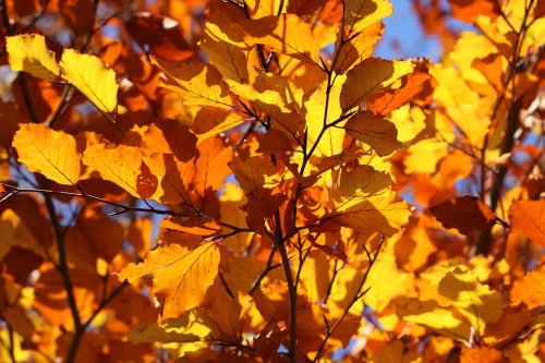 Autumn Ambers for Fall 2017 Free Stock photos.jpg