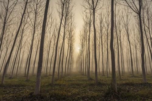 Bois Blonds Atelier Cologne fog crisp white woods josealbafotos Pixabay