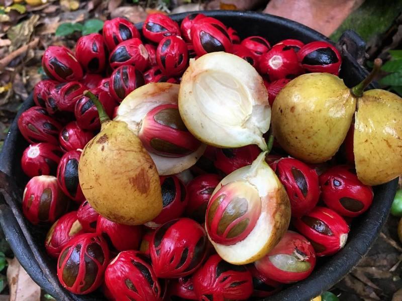 Selain keindahan alamnya, Bandaneira terkenal dengan buah Pala @myaprika