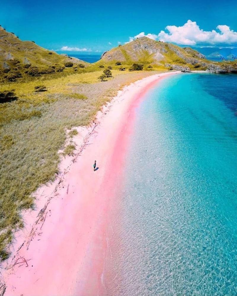 Di Pulau Komodo terdapat wisata pantai yang unik namanya Pink Beach. via @sunflowerdise