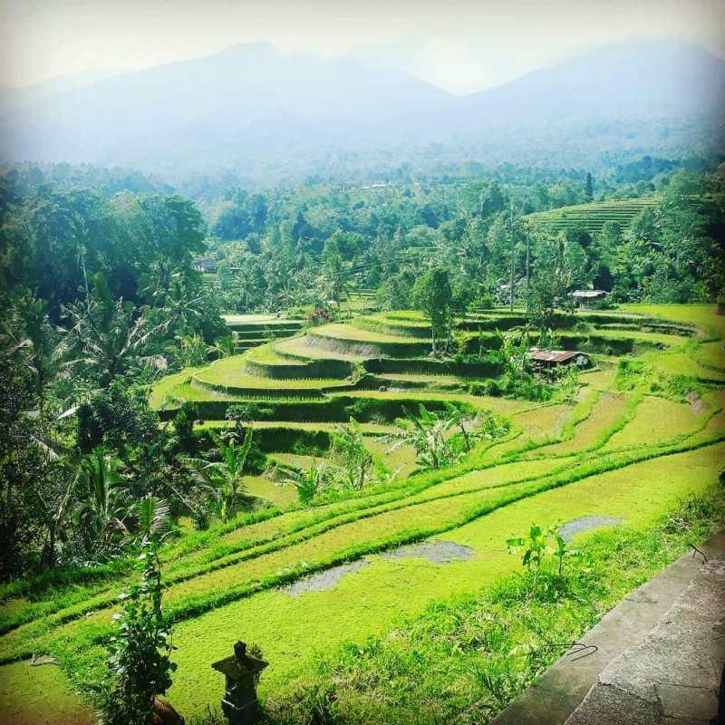 Ada yang mau liburan ke Penebel Bali?