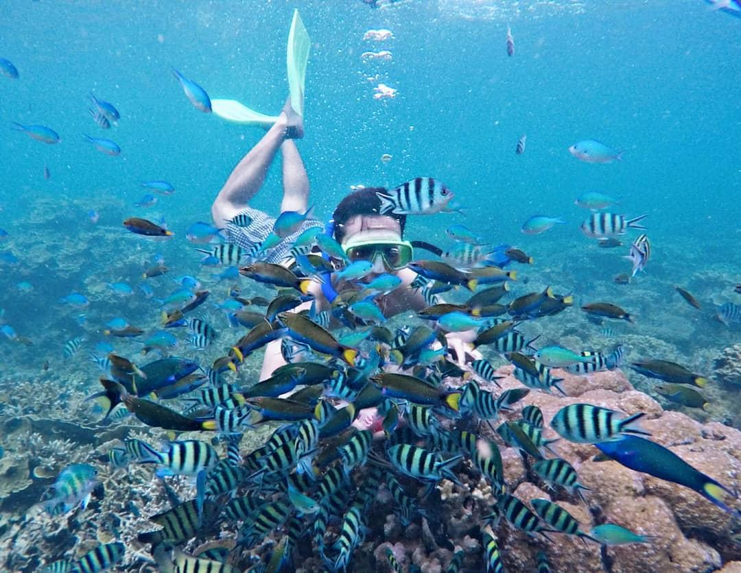Di Menjangan bay anda bisa berenang dengan banyak ikan lucu ! via @jordanthree