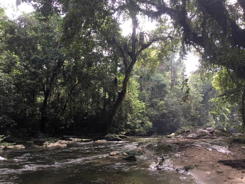 Kawasan taman nasional Bukit Baka Bukit Raya National Park dihuni oleh setidaknya 817 jenis tumbuhan