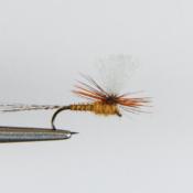 Keltaisen Ruskehtava Parachute Pintaperho
