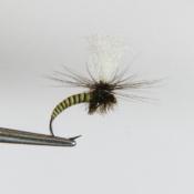Vihreä Musta Quill Klinkhammer Pintaperho