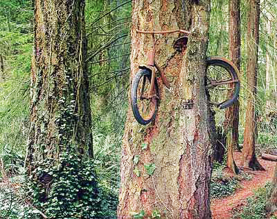perierga.gr - Περίεργα αντικείμενα που... σφήνωσαν στα δέντρα!