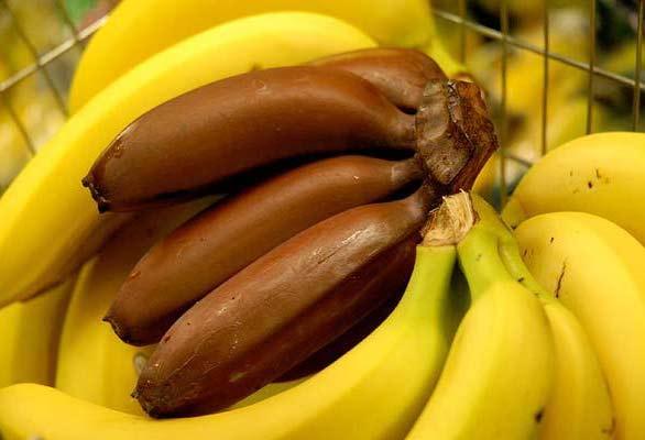 perierga.gr - Κόκκινες μπανάνες: Άλλο φρούτο!