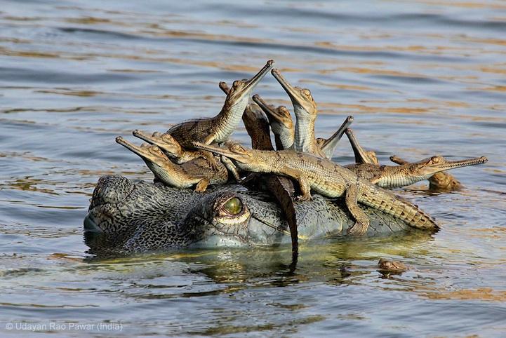 perierga.gr - Οι νικητές του Wildlife Photographer 2013