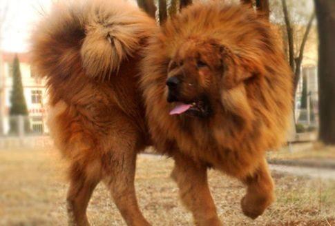perierga.gr - Σκύλος πουλήθηκε για 1,44 εκατ. ευρώ!