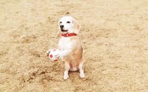 perierga.gr - Ο σκύλος... τερματοφύλακας! (βίντεο)