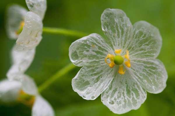Αποτέλεσμα εικόνας για λουλούδι