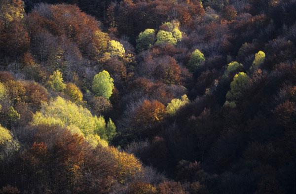 perierga.gr - Η Ελλάδα μέσα από τα μάτια του WWF!