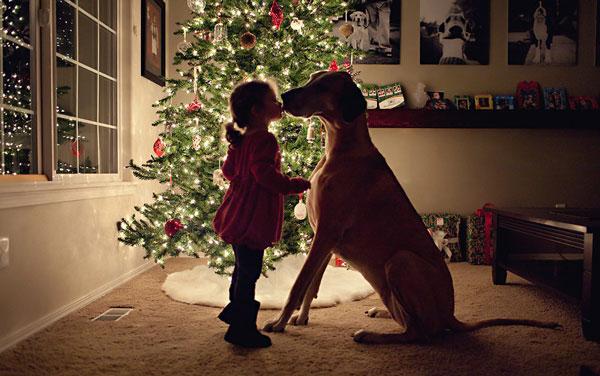 perierga.gr - Ο σκύλος σου σ' αγαπάει και σου το δείχνει!