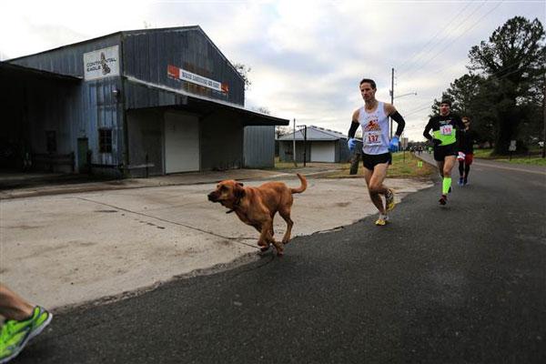 perierga.gr - Σκύλος... τό 'σκασε για να τρέξει Μαραθώνιο και κέρδισε!