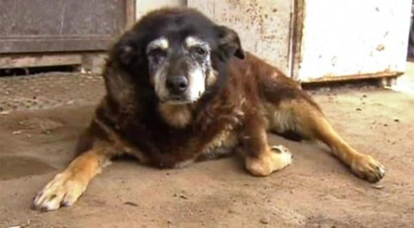 perierga.gr - Πέθανε ο γηραιότερος σκύλος στον κόσμο σε ηλικία 30 ετών!