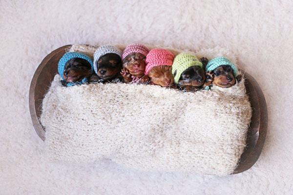 perierga.gr - Πανέμορφα κουτάβια ποζάρουν σαν... μωρά!