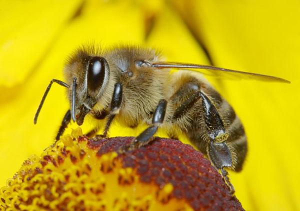 perierga.gr - 9 πράγματα που δεν γνωρίζατε για τις μέλισσες!